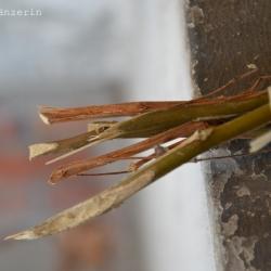vertrockneteblumen1